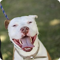 Adopt A Pet :: Sheldon - Fresno, CA