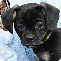 Adopt A Pet :: Lucille - Gilbert, AZ