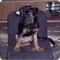 Adopt A Pet :: Dos - Cincinnati, OH