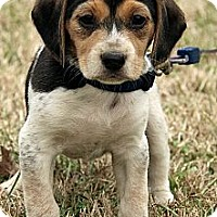 Adopt A Pet :: Zoe - Staunton, VA