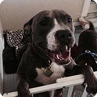 Adopt A Pet :: Jewel - Irving, TX