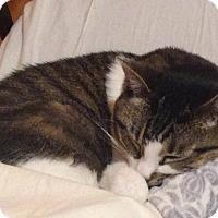 Adopt A Pet :: Divine - Chicago, IL