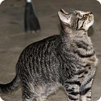 Adopt A Pet :: Spyder - Sylvania, GA