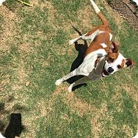 Adopt A Pet :: Chester - Gadsden, AL