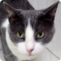 Adopt A Pet :: Gracie - Mt. Vernon, NY
