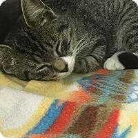Adopt A Pet :: Smee - Richboro, PA