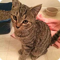 Adopt A Pet :: Chewy - Gaithersburg, MD