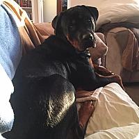 Adopt A Pet :: King - Kaufman, TX