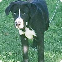 Adopt A Pet :: SOX - Coeburn, VA