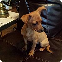 Adopt A Pet :: Lulu - Owensboro, KY