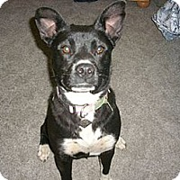 Adopt A Pet :: MOLLY - Childress, TX
