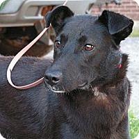 Adopt A Pet :: Cammie - Rigaud, QC