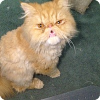 Adopt A Pet :: Beauregard - Davis, CA