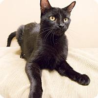 Adopt A Pet :: Poe - Chicago, IL
