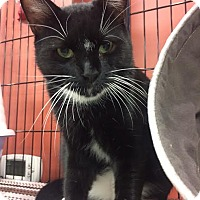 Adopt A Pet :: Mr. Jitters - North Haledon, NJ