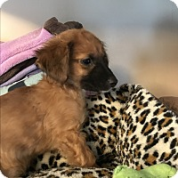 Adopt A Pet :: Conrad - Pennigton, NJ