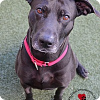 Adopt A Pet :: Buddy - Youngwood, PA