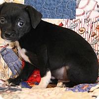 Adopt A Pet :: Nicky - Yuba City, CA