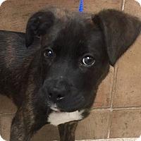 Adopt A Pet :: I'M ADOPTED Tyson Parham - Oswego, IL