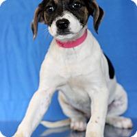 Adopt A Pet :: Utah - Waldorf, MD