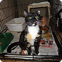 Adopt A Pet :: Pandora - Wakinsville, GA