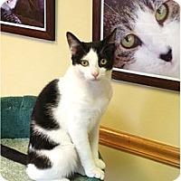 Adopt A Pet :: Juniper - Naples, FL
