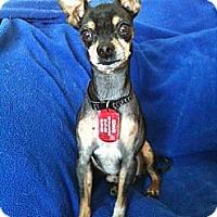 Adopt A Pet :: Bolt - Minnetonka, MN