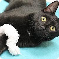 Adopt A Pet :: Tai - Chicago, IL