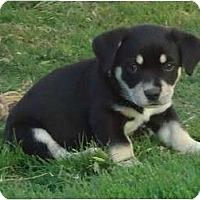 Adopt A Pet :: Dino - Arlington, TX