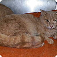 Adopt A Pet :: Ted - Dover, OH