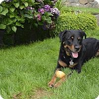 Adopt A Pet :: Murphy - Surrey, BC