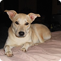 Adopt A Pet :: Zoey - North Jackson, OH