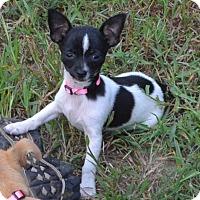 Adopt A Pet :: Lisa Marie - Bedminster, NJ