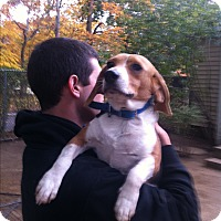 Adopt A Pet :: Parker - Shelter Island, NY