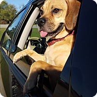Adopt A Pet :: Bodie - Homewood, AL
