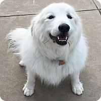 Adopt A Pet :: Bridgette.ADOPTED!! - Bloomington, IL