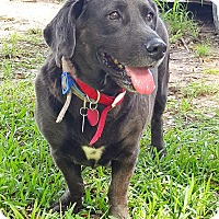 Adopt A Pet :: Boomer - Houston, TX