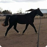 Adopt A Pet :: **SHETAN - Peralta, NM