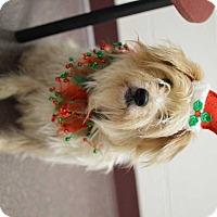 Adopt A Pet :: Snowball - Youngsville, NC