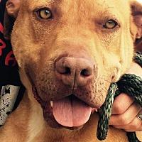 Adopt A Pet :: Sanders - Clifton, TX