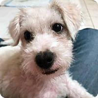 Adopt A Pet :: Trevor - San Diego, CA