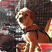 Adopt A Pet :: Kirby - North Hollywood, CA