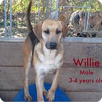 Adopt A Pet :: Willie - Boaz, AL