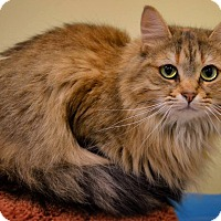 Adopt A Pet :: Tisha - Byron Center, MI