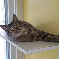 Adopt A Pet :: Cruella - Port Clinton, OH