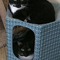 Adopt A Pet :: Dora and Twinkle - Novato, CA
