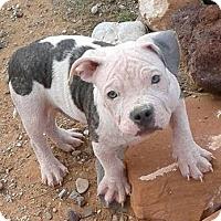 Adopt A Pet :: WINSTON - taking applications - Hurricane, UT
