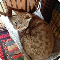 Adopt A Pet :: Wolfgang - Cardwell, MT