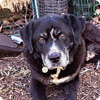 Adopt A Pet :: Marcus - House Springs, MO