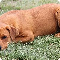 Adopt A Pet :: Red - Marietta, OH